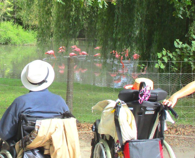 Découverte du zoo de Branféré, le vendredi 27 août.